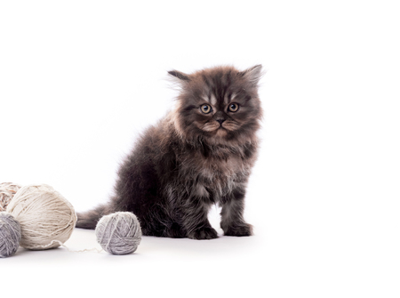 Cute dark fur kitten with laces balls isolated
