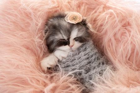 Gatito durmiendo dulcemente
