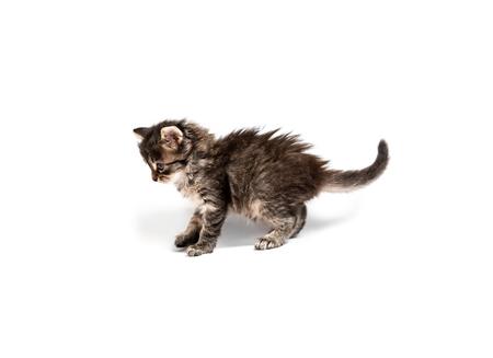Little striped kitten isolated Banco de Imagens