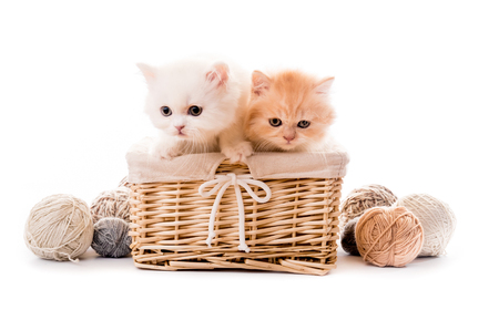 Two cute white kittens in basket isolated