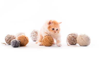 Kitten playing with laces balls isolated