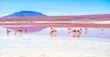 Flamingos at Colorado lagoon