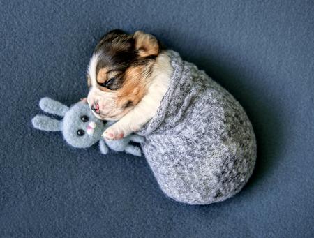 Little cute beagle puppy Stock fotó