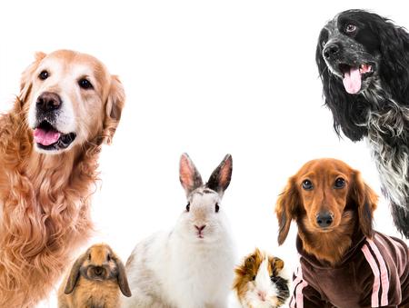 Gruppe süßer flauschiger Tiere
