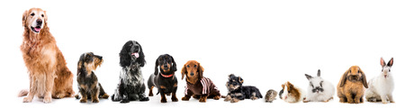 Collage of pets isolated on white