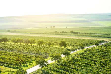 Sunrise over green vineyards, Moravia Stock Photo