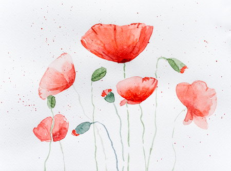 Natural drawing of poppy flowers