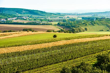 Sunny fields of Moravia