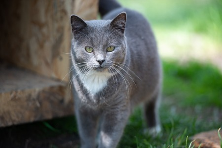 Gray cat in the nature Stock Photo