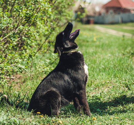 Dog sitting in the grass Stock Photo