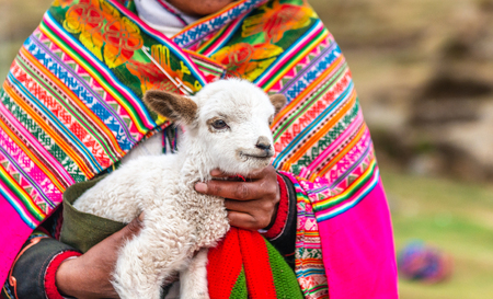 Peruvian women with little alpaca lamb Stok Fotoğraf - 124175178