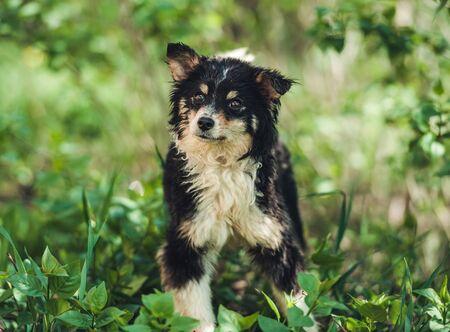 Little black mongrel dog 스톡 콘텐츠