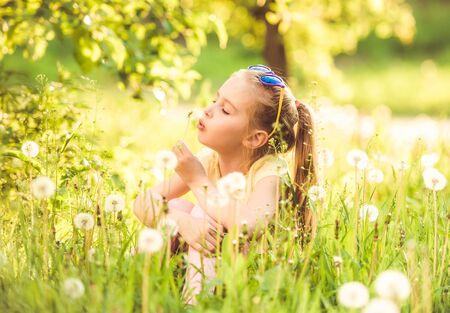 Pretty little girl gathering white dandelions 스톡 콘텐츠