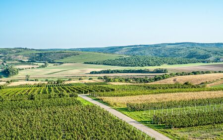 Sunrise over green vineyards, Moravia Reklamní fotografie