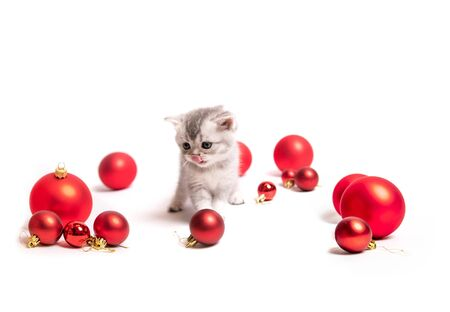 Small furry kitten with red balls Фото со стока