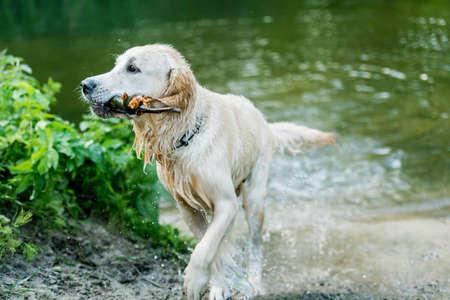 Lovely dog having fun in river Foto de archivo
