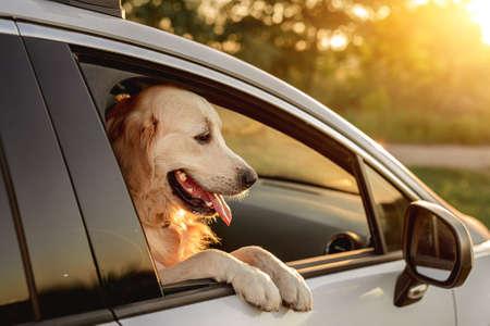Dog looking in open car window 스톡 콘텐츠 - 153444328