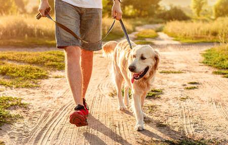 Golden retriever walking next to man legs