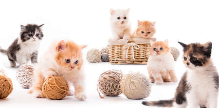 Kittens isolated on white 스톡 콘텐츠