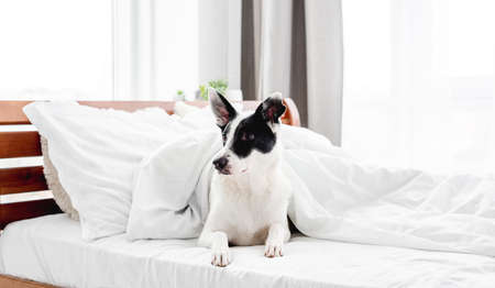 Cute dog in the bed Archivio Fotografico
