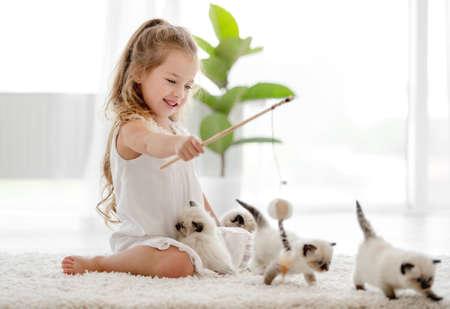 Girl with ragdoll kittens Archivio Fotografico