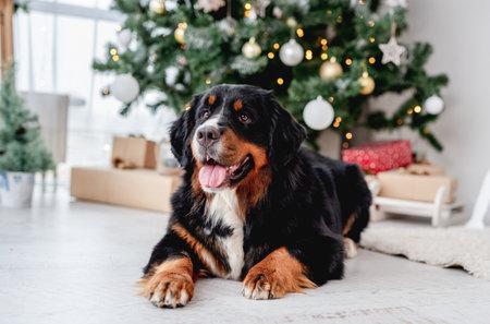 Dog near christmas tree at home Archivio Fotografico