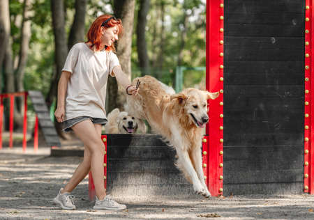 Girl with golden retriever dogs