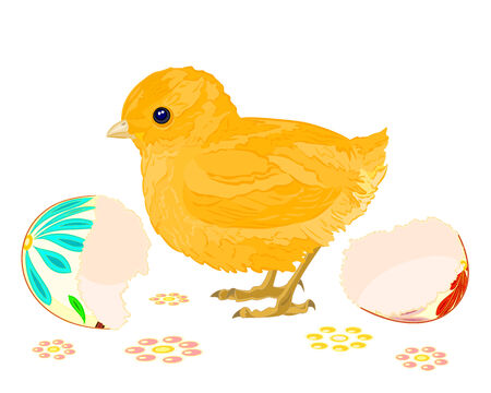 hatched: Easter chick hatched from Easter eggs isolated on white background