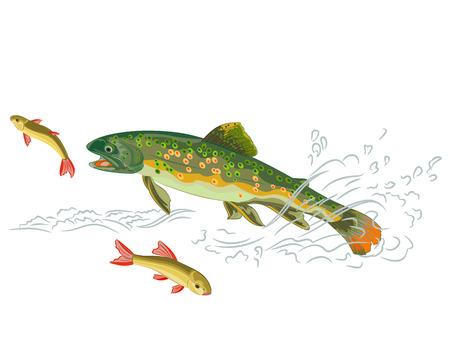 brown trout: Brook trout  predator catch a fish in the wild stream