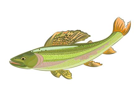 grayling: Grayling Thymallus r�o hermoso pez depredador ilustraci�n vectorial corriente
