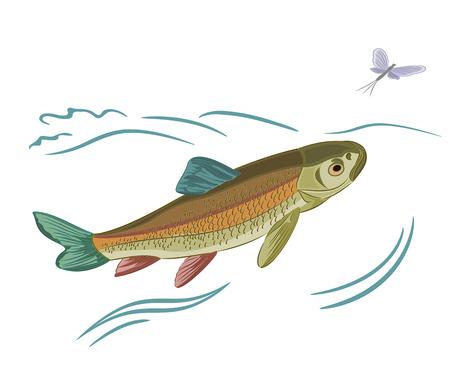 ephemera: Pesce catturato ephemera illustrazione vettoriale Vettoriali
