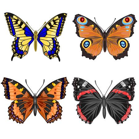 abstrakt: Butterfly