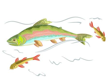 American rainbow trout predator catch a fish in the wild stream