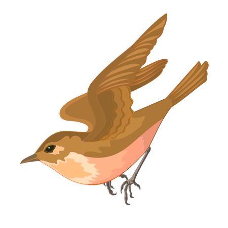chickadee: 0range bird in flight vector illustration  without gradients