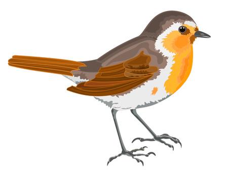 Robin bird vector illustration without gradients Иллюстрация