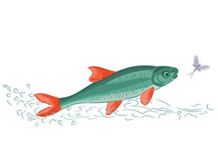 ephemera: Fish and ephemera