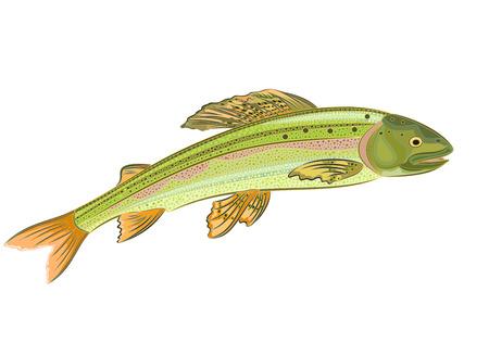 grayling: Grayling, pescados de color salm�n-depredadora eps 8 vector sin gradientes Vectores