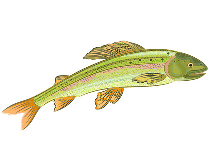 speckled trout: Grayling, salmon-predatory fish eps 8 vector without gradients Illustration