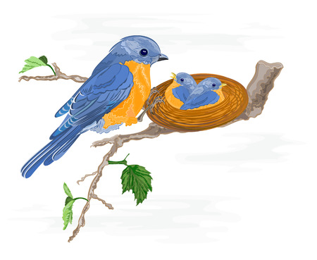loveable: Birdie and little birds in the nest vector illustration without gradients