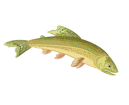brown trout: American brook troutsalmon-predatory fish eps 8 vector without gradients
