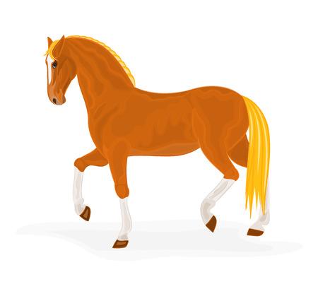 sorrel: Sorrel horse vector illustration eps 8  without gradients
