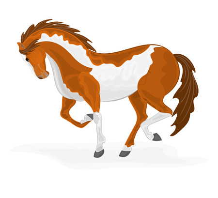 piebald: Piebald horse vector illustration eps 8  without gradients