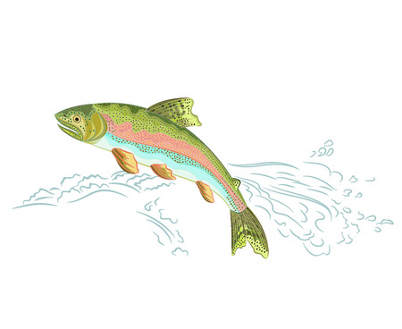 Amerikanische Regenbogenforelle springt über das Wehr