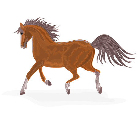 piebald: Brown horse   without gradients