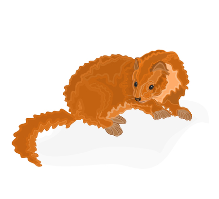 marten: Young martens vector illustration eps 8  without gradients Illustration