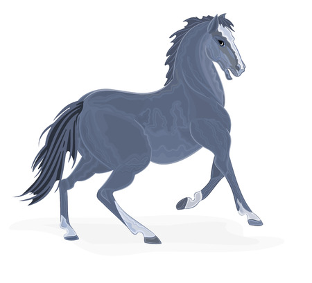 piebald: Black horse vector illustration eps 8  without gradients