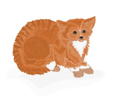 redheaded: Pelirroja tomcat gato