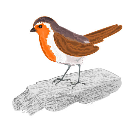 chickadee: Robin bird on the stone illustration without gradients