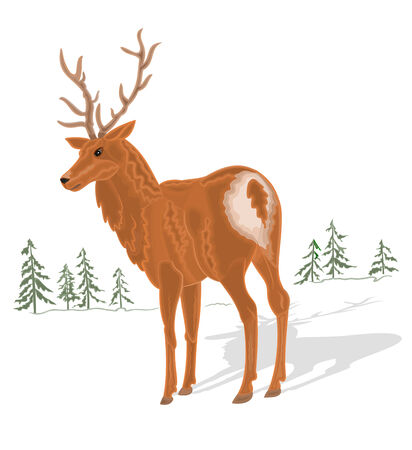 wild venison: Young deer and trees in the background Illustration