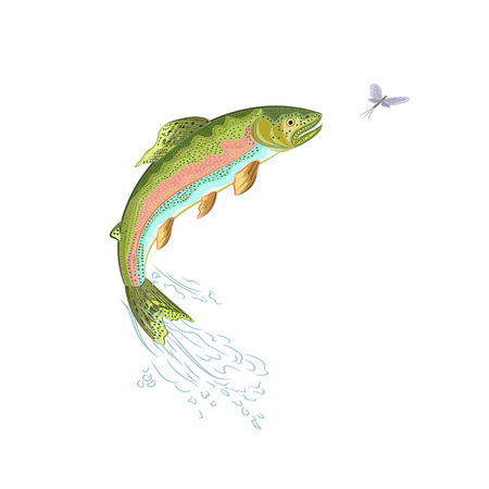 trout fishing: American trout jumps ilustration without gradients Illustration